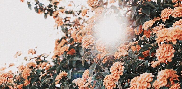 Nachhaltige Blumen